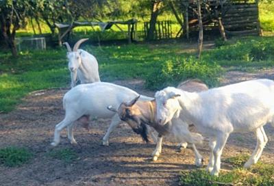 Azylová farma Jarikhanda 2
