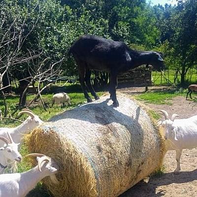Azylová farma Jarikhanda 4