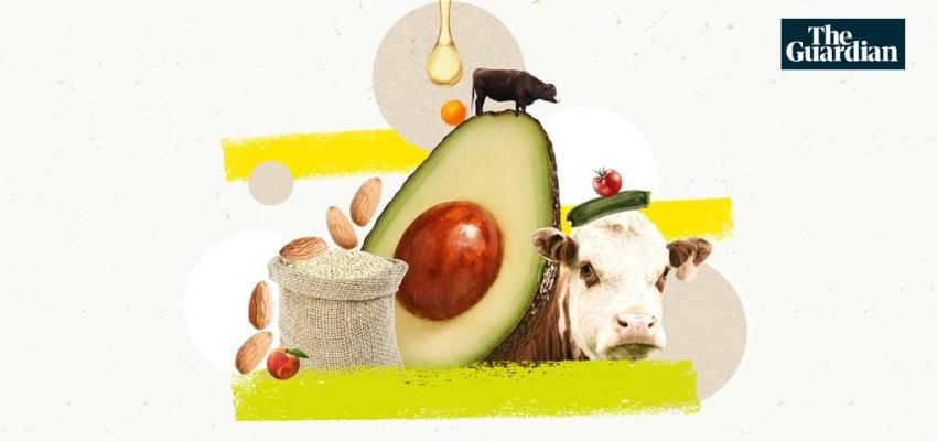 Proč byste měli přejít na dietu bez zvířat: 18 argumentů pro jezení masa vyvráceno